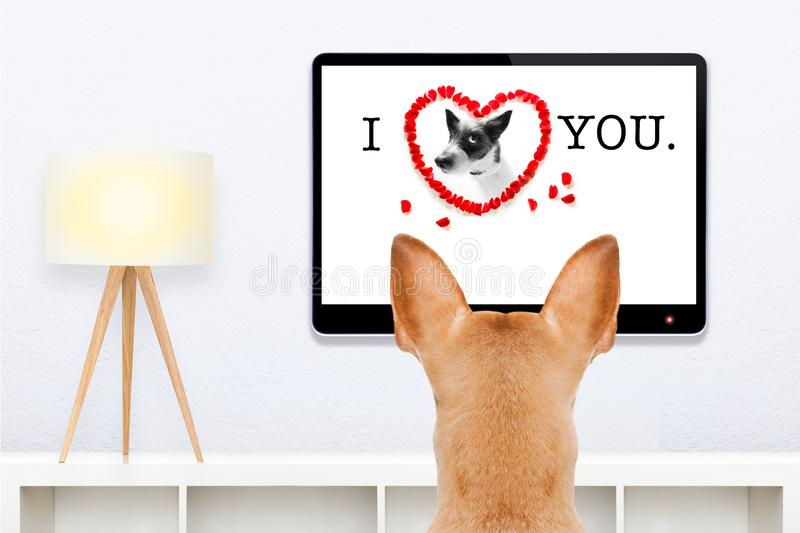 Dog watching tv stock images