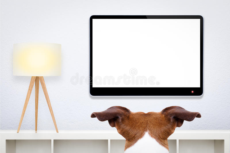 Dog watching tv royalty free stock images