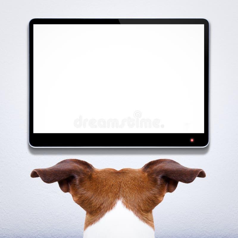 Dog watching tv stock photo