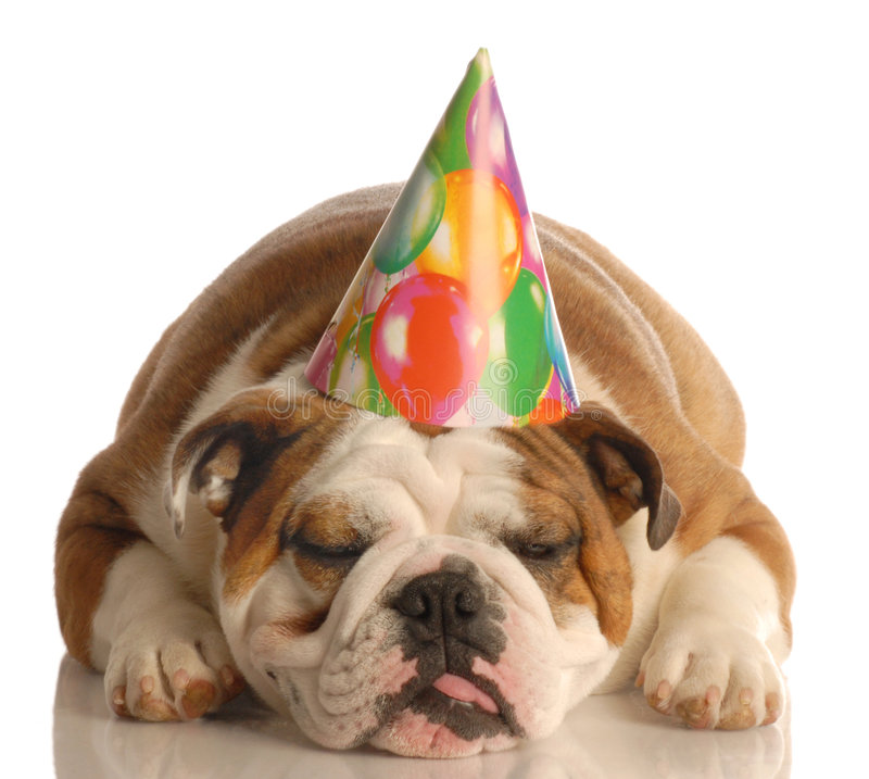 Dog wearing birthday h...