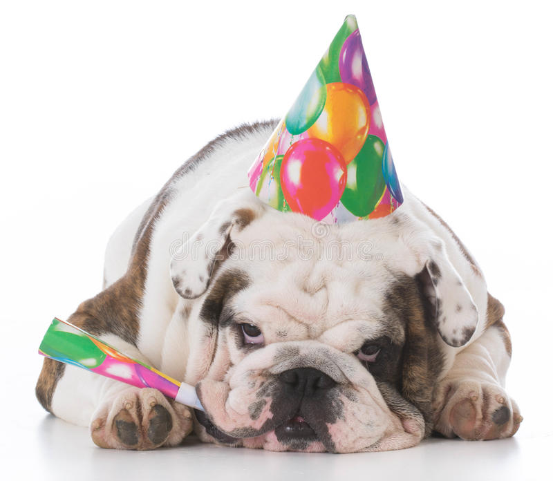dog wearing birthday hat stock images