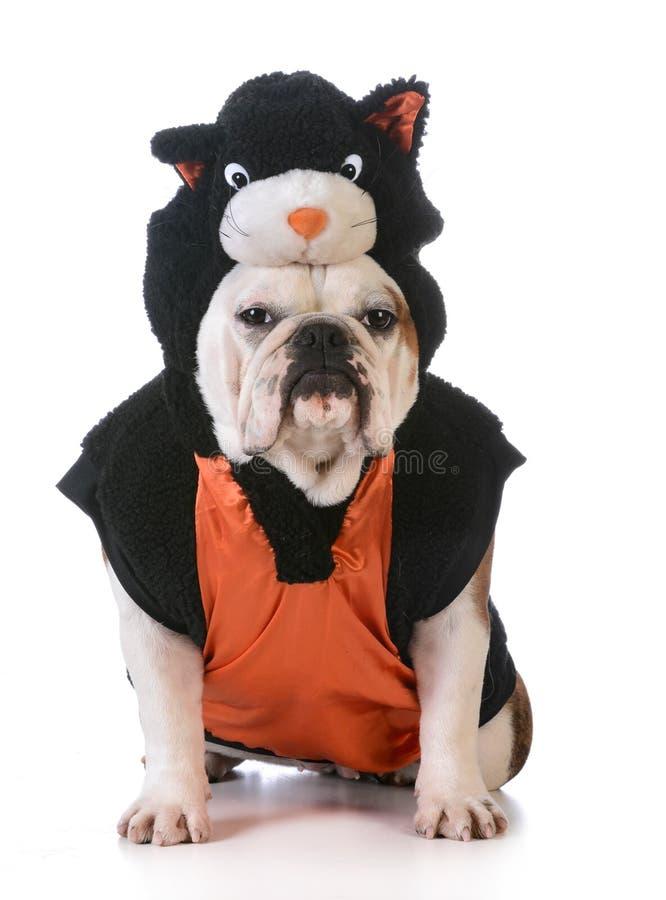 Dog wearing cat costume. On white background stock photo