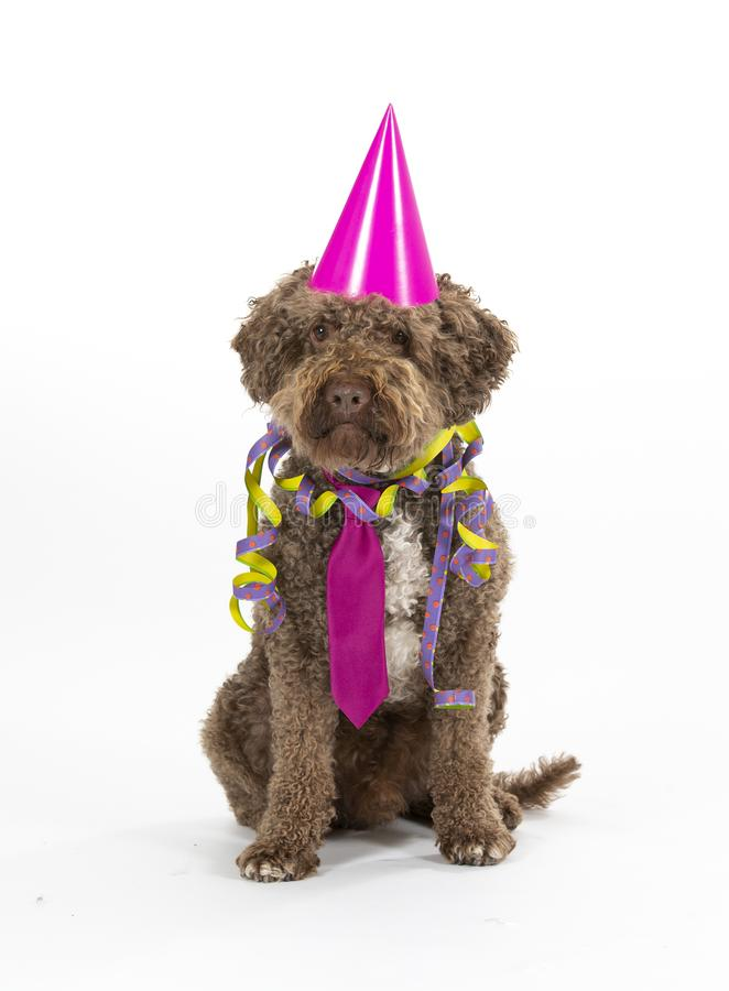 Funny dog celebrate and greeting card concept image. Dog is wearing colorful hat and tie for celebration. Concept image for greeting card concept. Party dog royalty free stock photos