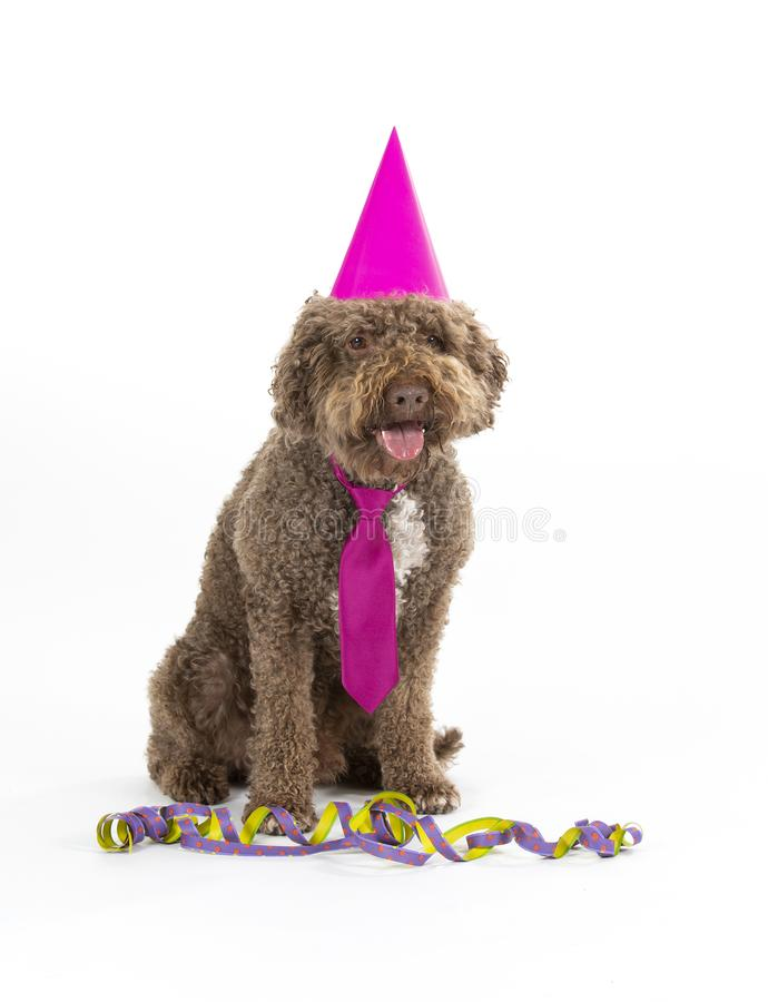 Funny dog celebrate and greeting card concept image. Dog is wearing colorful hat and tie for celebration. Concept image for greeting card concept. Party dog stock images