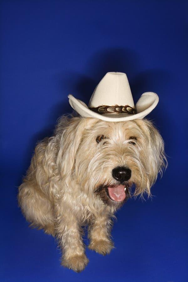 Dog wearing cowboy hat. royalty free stock photos