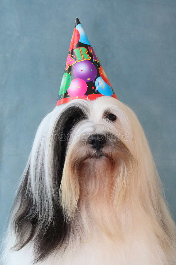 Dog wearing party hat stock photography