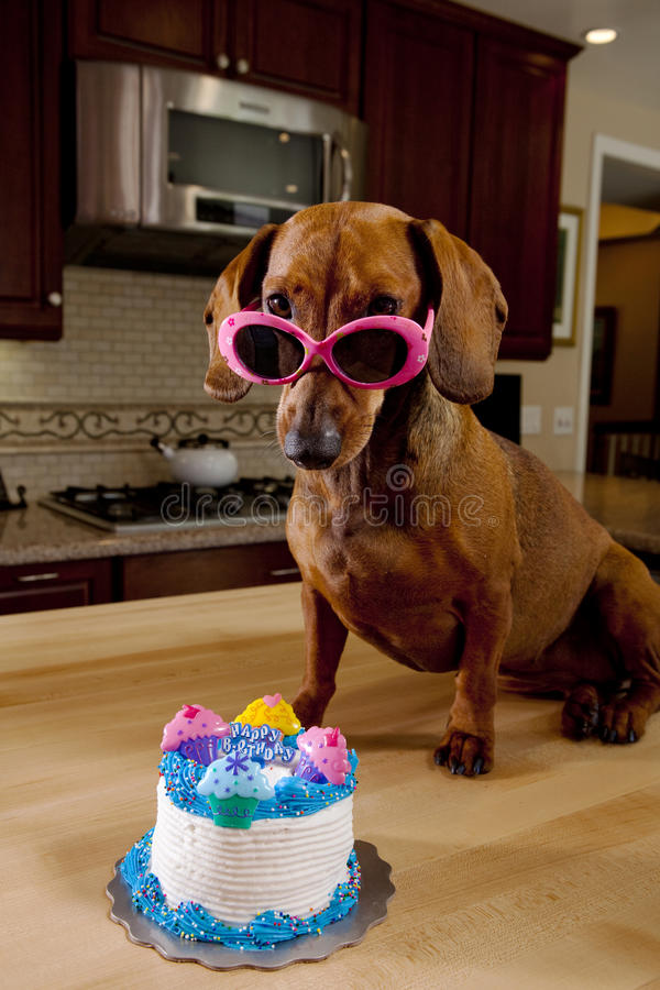 Download Dog Wearing Pink Sunglasses With Birthday Cake Stock Image - Image: 15115681