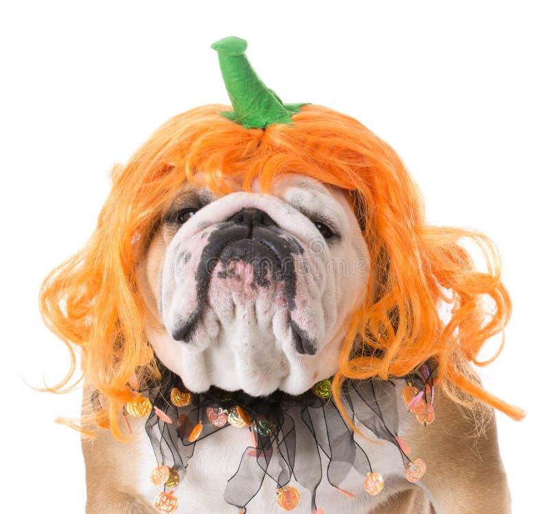 Download Dog Wearing Pumpkin Costume Stock Photo - Image of wrinkled comical 81656432  sc 1 st  Dreamstime.com & Dog Wearing Pumpkin Costume Stock Photo - Image of wrinkled comical ...
