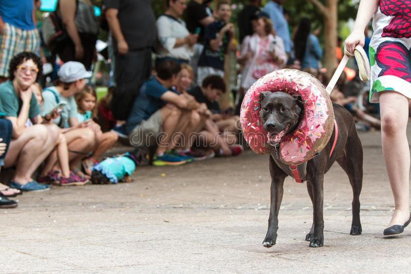 Dog Wears Doughnut Costume At Atlanta Doggy Con Event. Atlanta, GA, USA - August 18, 2018: A dog wearing a doughnut costume around his head walks in front of a stock images