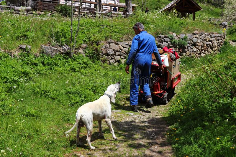 Dog welcomes boss in little hamlet Dormillouse, french Hautes Alpes royalty free stock photos