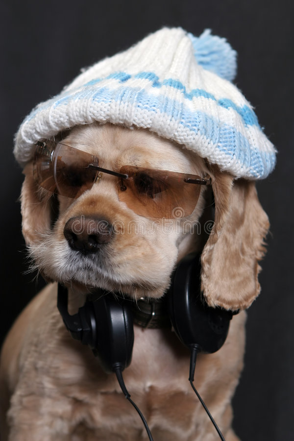 Dog in white hat royalty free stock photos