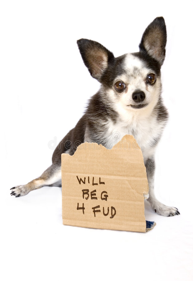 Dog will beg for food royalty free stock photo