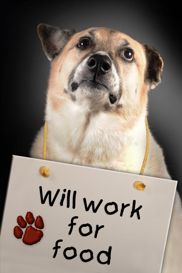 Dog will work for food. A dog with at sign that says, Will work for food, around its neck royalty free stock photography