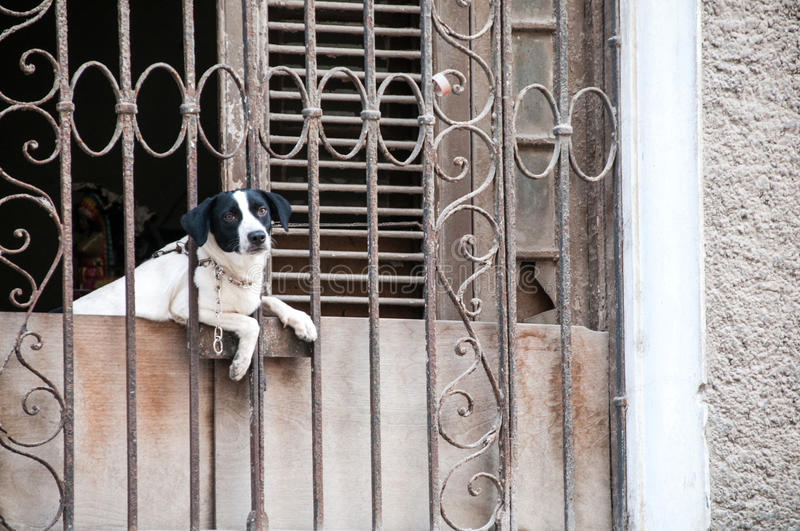 Dog at the window behind bars stock photography