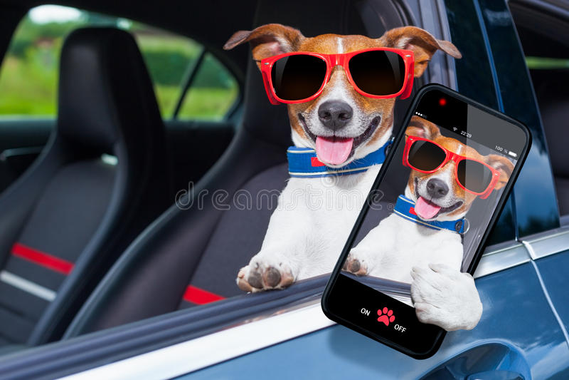 Dog window car stock photos