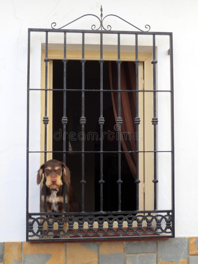 Dog in window with Mediterranean bars stock photography