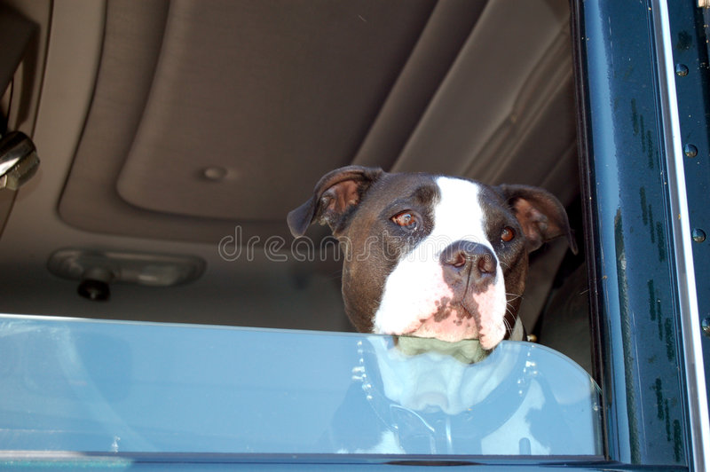 Dog in Window of Truck. Sad dog waiting for his master in the cab of a semi-truck royalty free stock image