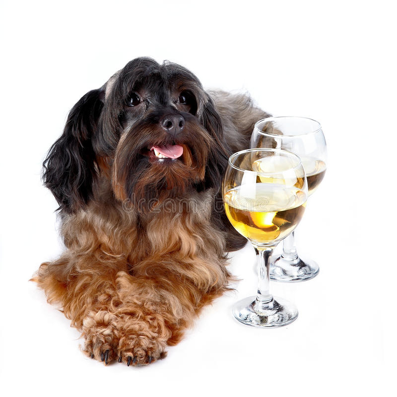 Decorative dog with a glasses stock images
