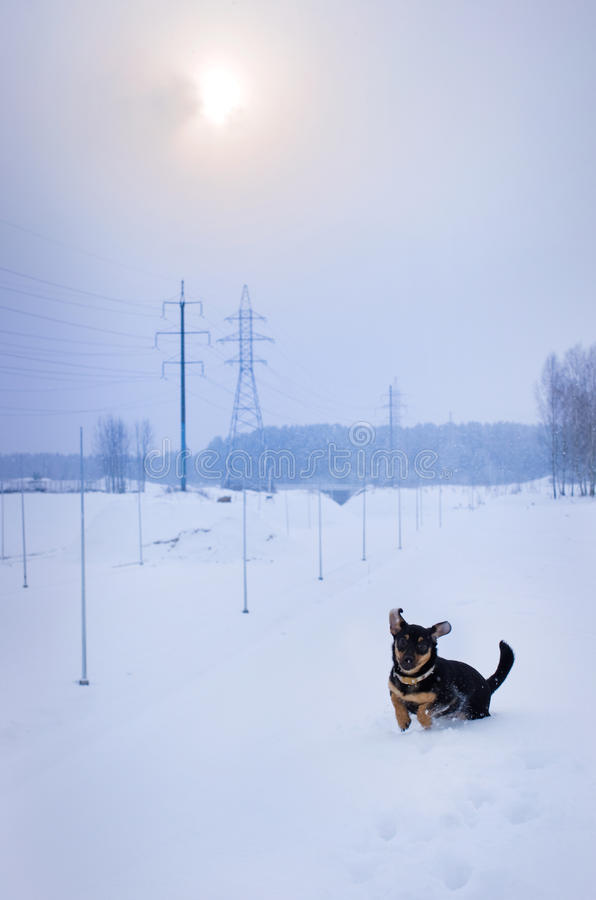 Download Dog in winter stock image. Image of snow, beautiful, companion - 28594459