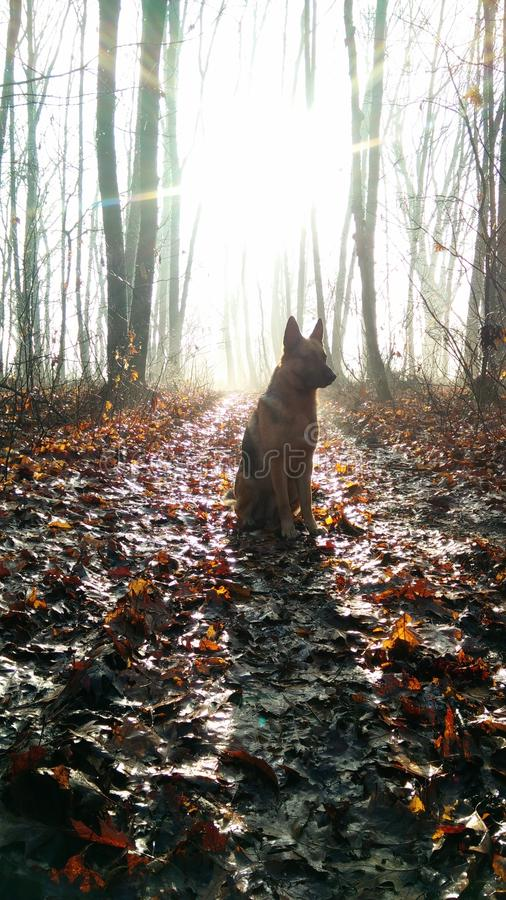 Dog in a winter forest stock photo