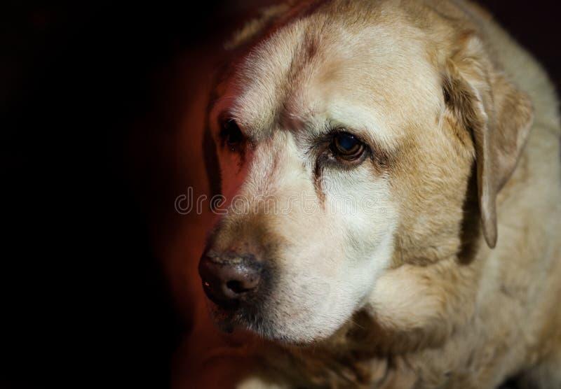 Dog 14 wise dog royalty free stock photos