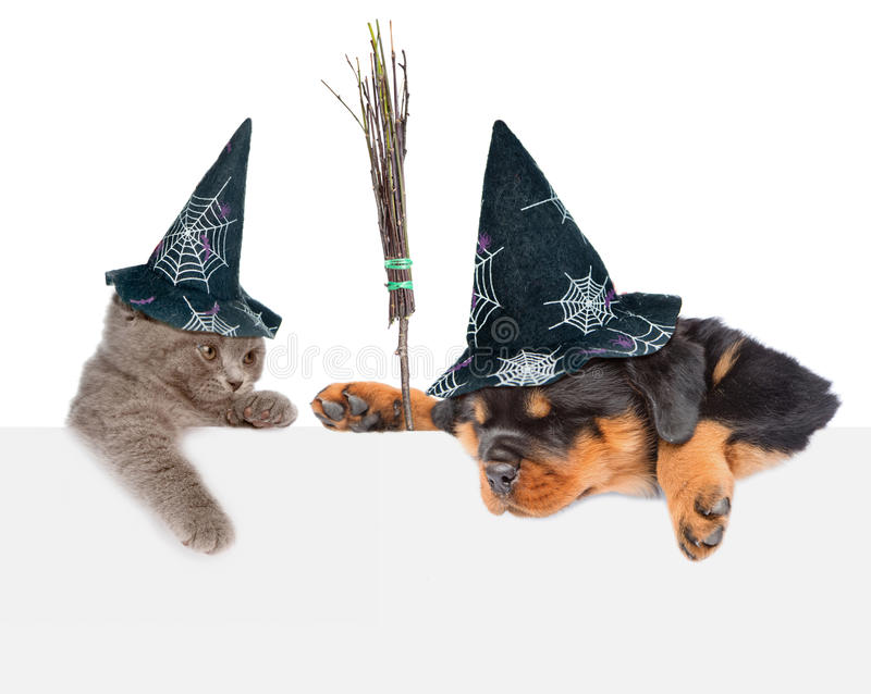Dog with witches broom stick and Cat with hats for halloween peeking from behind empty board. looking down. isolated on white. Background stock images