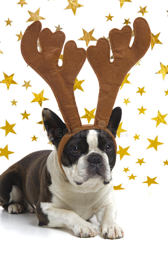 Free Dog With Antlers At Christmas Stock Image - 27288611