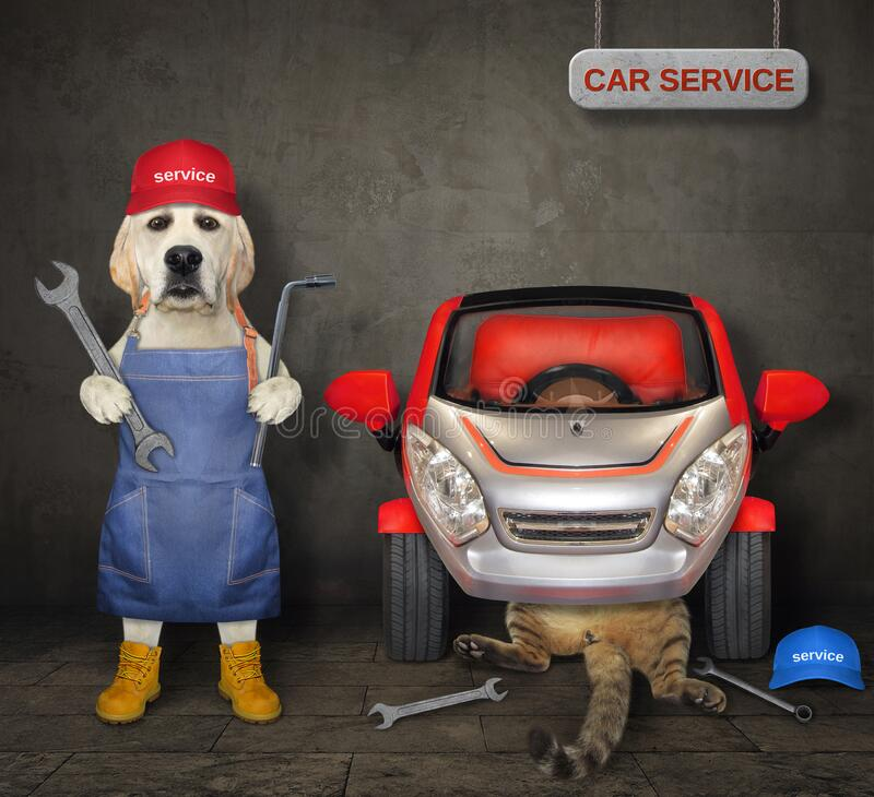 Free Dog With Cat Fixing Car In Garage Stock Image - 197439791