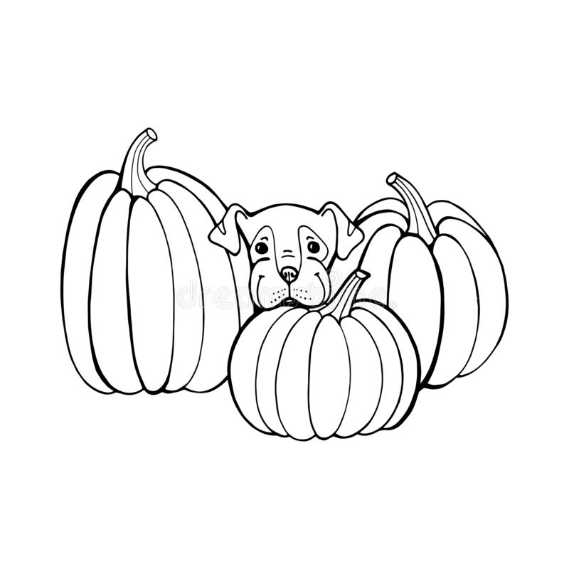 Free Dog With Pumpkin. Coloring Book Page. Outlines Of Animals In Halloween Pumpkins Royalty Free Stock Image - 163162166