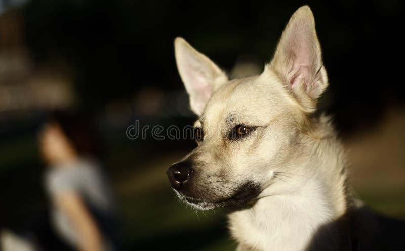 Dog wondering to play stock photo