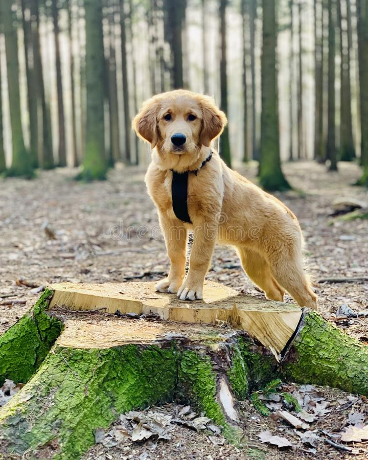 Dog in the woods stock images