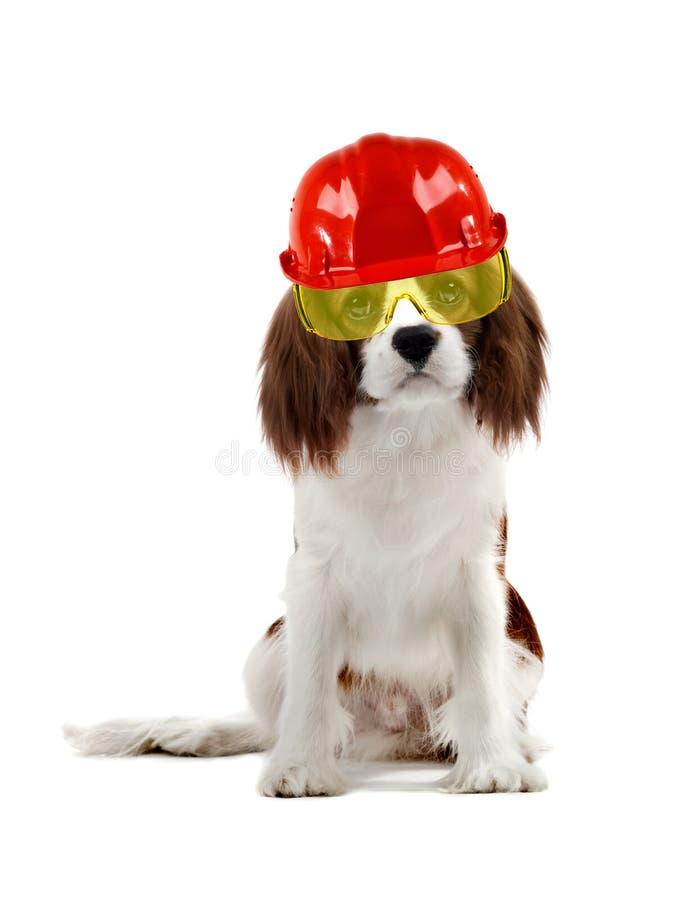 Dog worker builder stock photos