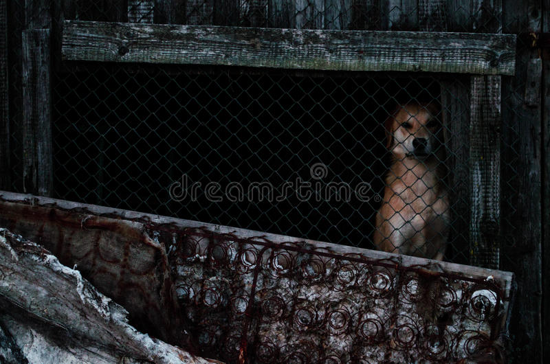 dog in the yard in the shed royalty free stock images
