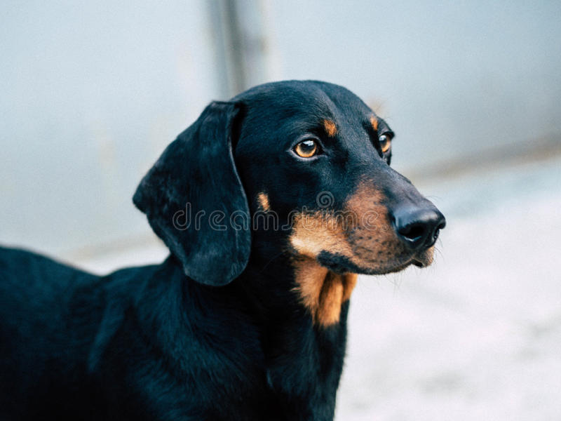 Dog in the yard royalty free stock photography