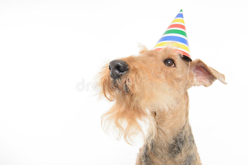 Dog is your best friend royalty free stock image