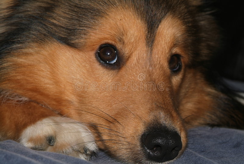Download Dog1 fotografia stock. Immagine di hound, mammiferi, fine - 202694