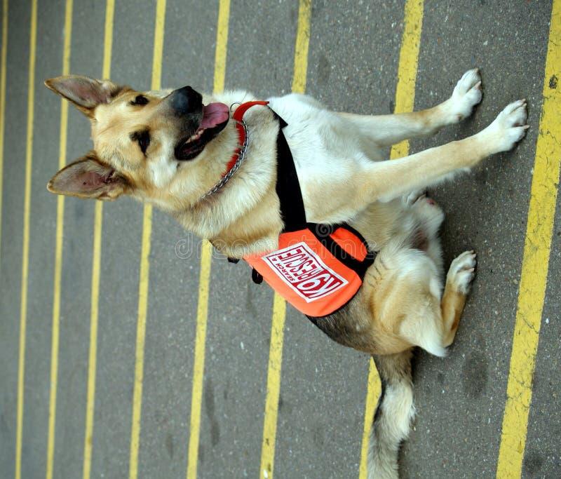 Dog3 image libre de droits