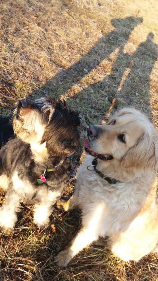 Dogfriends lizenzfreie stockbilder