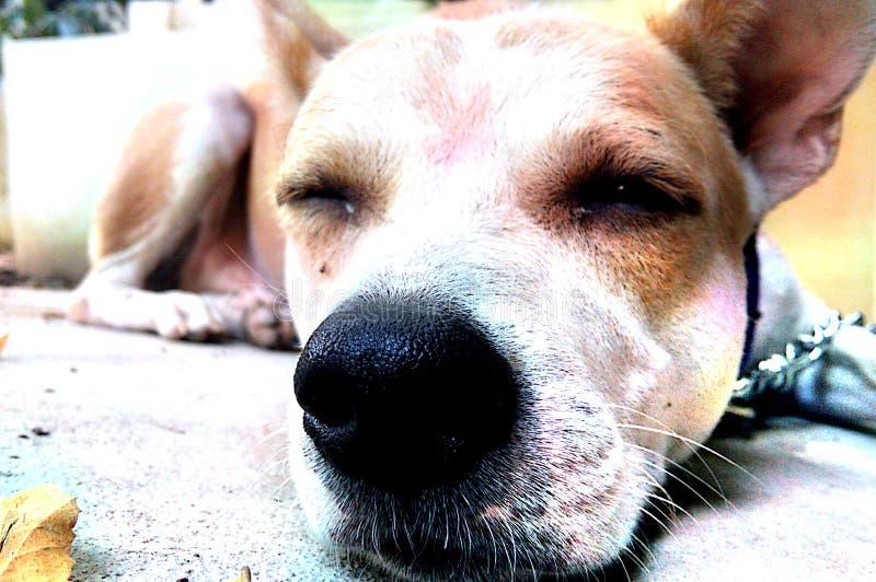 Doggie беспристрастный стоковое фото