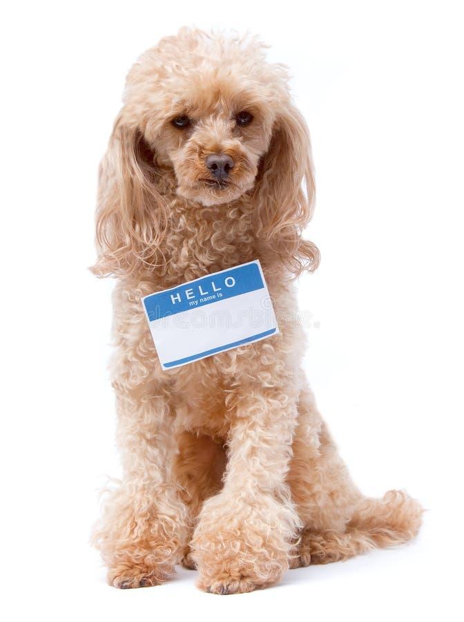 doggie здравствулте! стоковые изображения rf