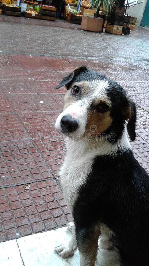 Doggie Uruguay Montevideo stock afbeelding