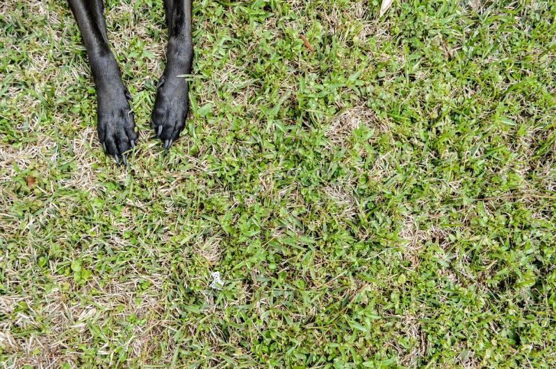 Doggiepoten in het gras stock foto's
