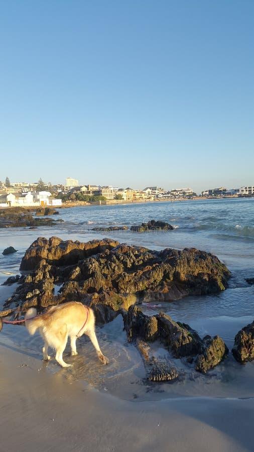Doggies играя в морской воде стоковое изображение rf