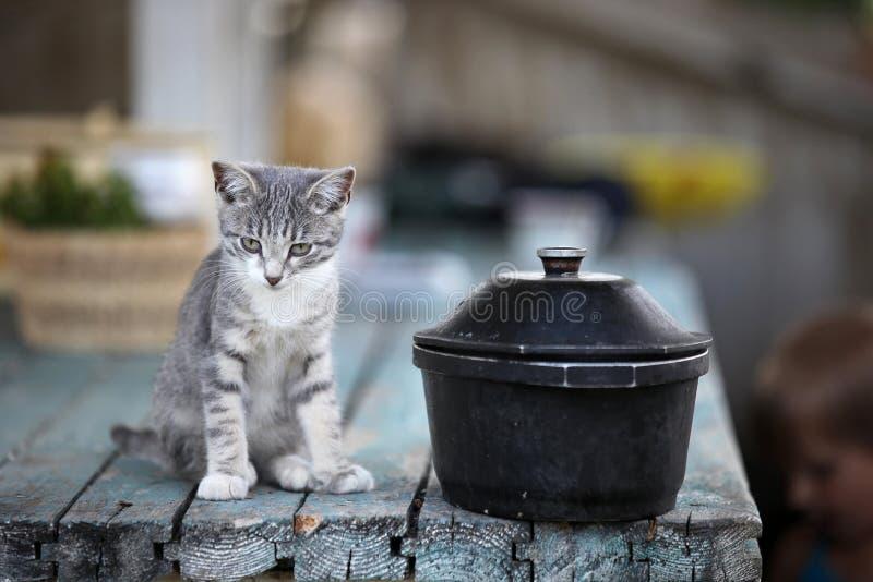 Dogging kokkärl för liten kattunge arkivbilder