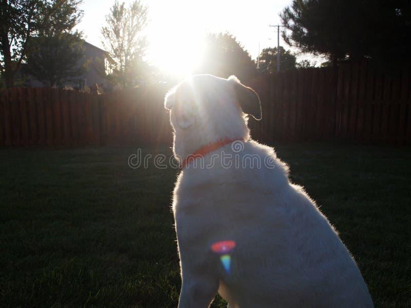Doggo e um por do sol fotografia de stock