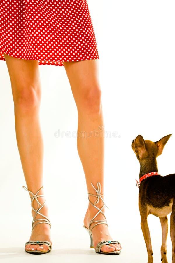 doggy свое предприниматель стоковое изображение rf