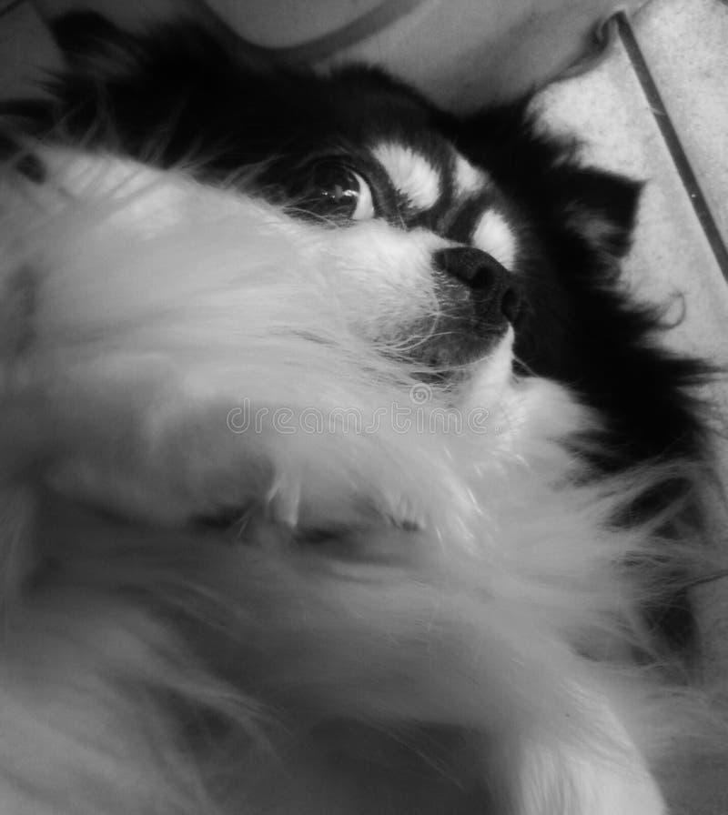 doggy images libres de droits