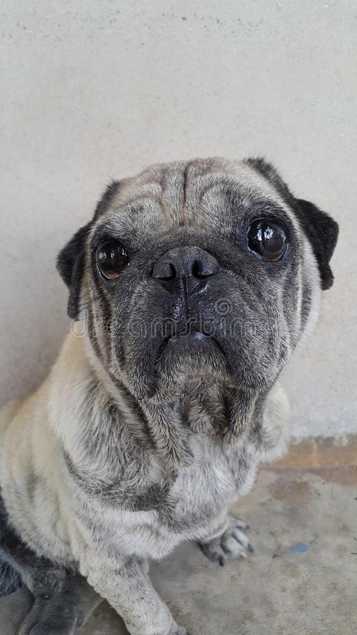 doggy photo stock