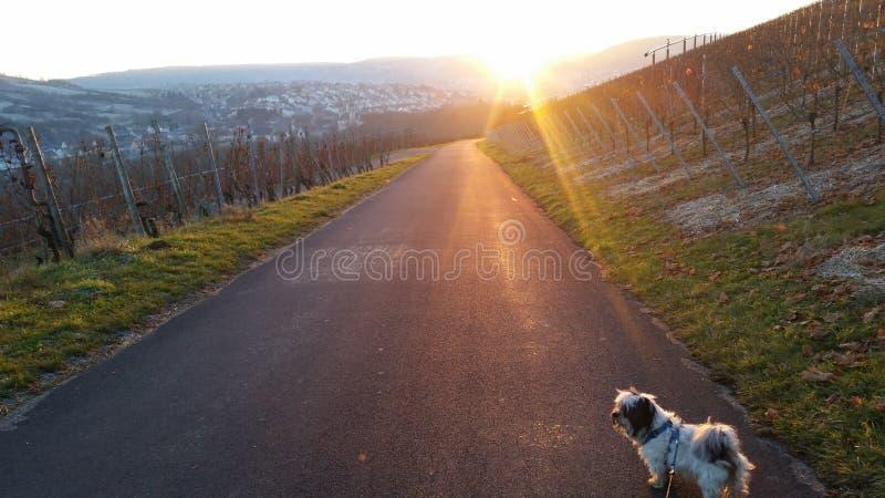 doggy stockfoto