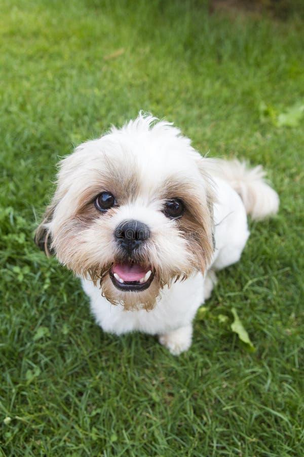 doggy photographie stock libre de droits